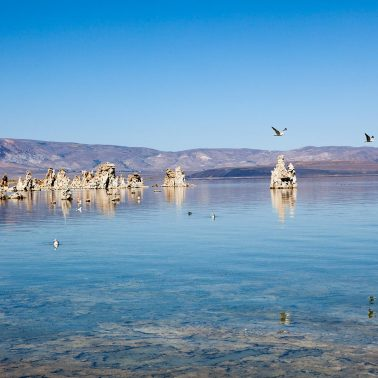 An image that shows a blue sky over Mono Lake with sea birds flying over Tufa Columns
