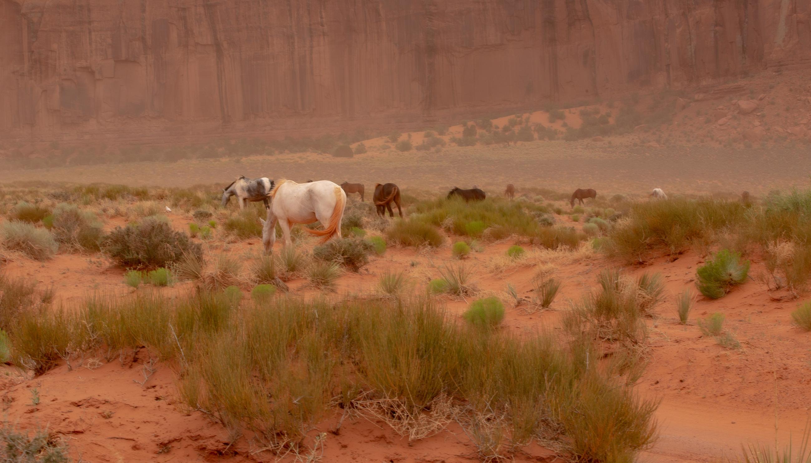 Wild horses in Monument Valley, Utah