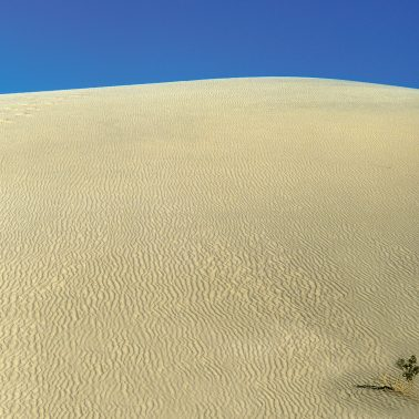sand dune with dark blue sky and a small green shrub